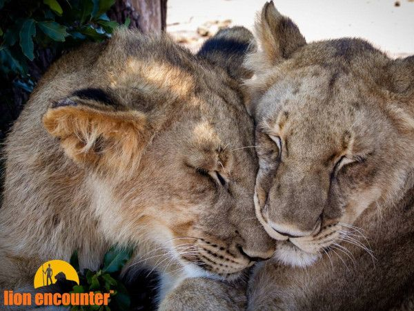 Wildlife Encounters only $150.00 pp