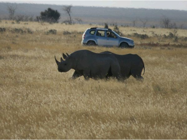Game drives and walking Tours