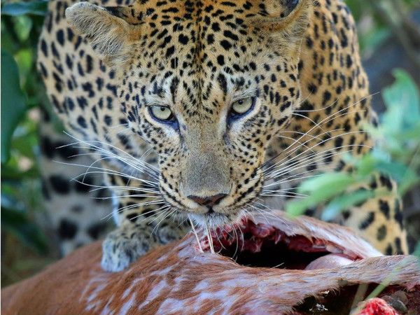 Chobe Safari and Victoria Falls best prize US$ 620.00pp